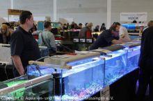 03-AQUA-FISCH--IG-Meerwasser-Tuebingen