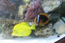 Einweihung_Meerwasseraquarium_Kinderklinik_14