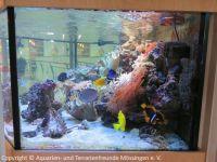 Kinderklinik-Aquarium_Wartungsarbeiten_2