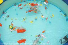 Korallen-Outlet-Sommerfest_5