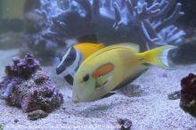 Pflege_Kinderklinik-Aquarium_6