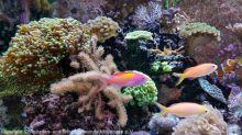 Aquarium_Heinz_17