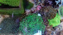 Aquarium_Heinz_11