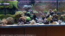 Aquarium_Heinz_00