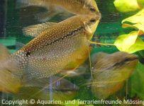 Aquarium_Schauber_14
