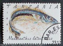Malacanthus-latovittatus_TANZANIA