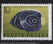 Pomacanthus_imperator_POLEN