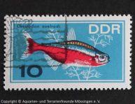 Paracheirodon_axelrodi_DDR