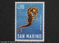Seepferdchen_SAN-MARINO
