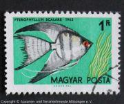 Pterophyllum_scalare_UNGARN