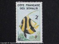 Wimpelfisch_SOMALIA