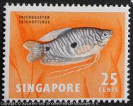 Trichogaster_trichopterus_SINGAPUR