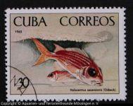 Holocentrus_ascensionis_KUBA