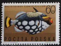 Picasso-Drueckerfisch-POLEN