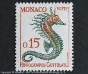 Hippocampus_guttulatus_MONACO