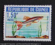 Gelber_Prachtkaerpfling_GUINEA