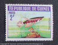 Senegalhechtling_GUINEA