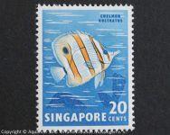 Chelmon_rostratus_SINGAPUR