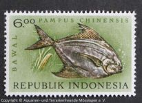 Pampus_chinensis_INDONESIEN