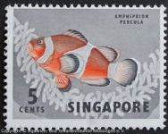 Amphiprion_percula_SINGAPUR