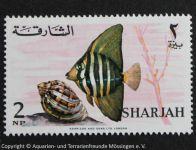 1_SHARJAH