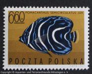 Pomacanthus_semicirculatus_POLEN