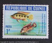 Hemichromis_fasciatus_GUINEA