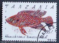 Hemichromis-bimalulatus_TANZANIA