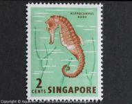Hippocampus_kuda_SINGAPUR