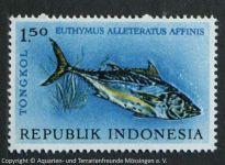 Euthymus_alleteratus_affinis_INDONESIEN