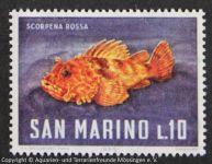 Scorpaena_SAN-MARINO