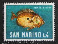 Petersfisch_SAN-MARINO