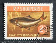 Karpfen_RPS